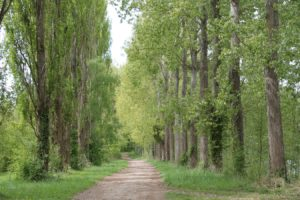 forêts, nature, domaine, camping